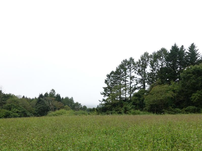 森の中のピッツァ屋さん_e0277800_20285815.jpg