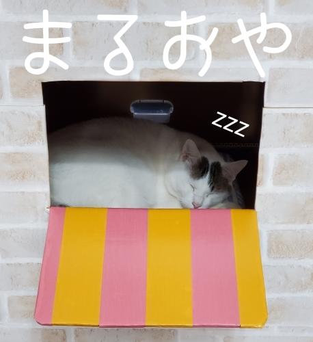 開店休業 まるおのさかなやさん _e0338831_14581984.jpg