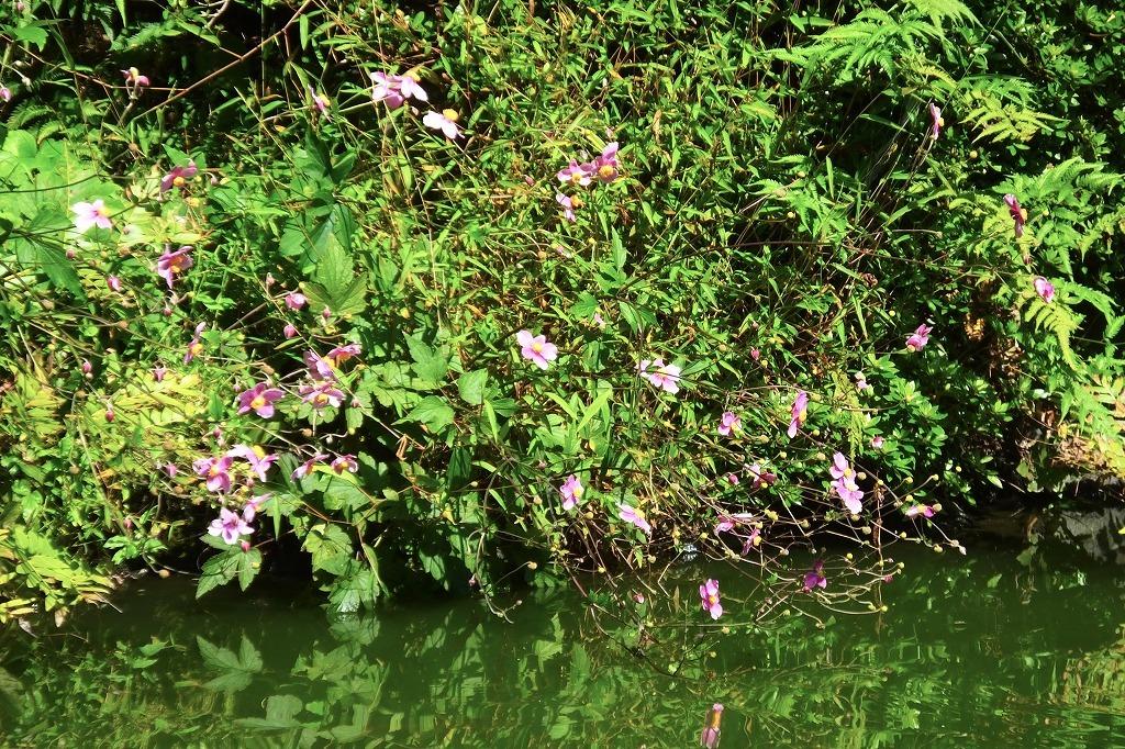 霊園で見た花など_b0236251_13590376.jpg