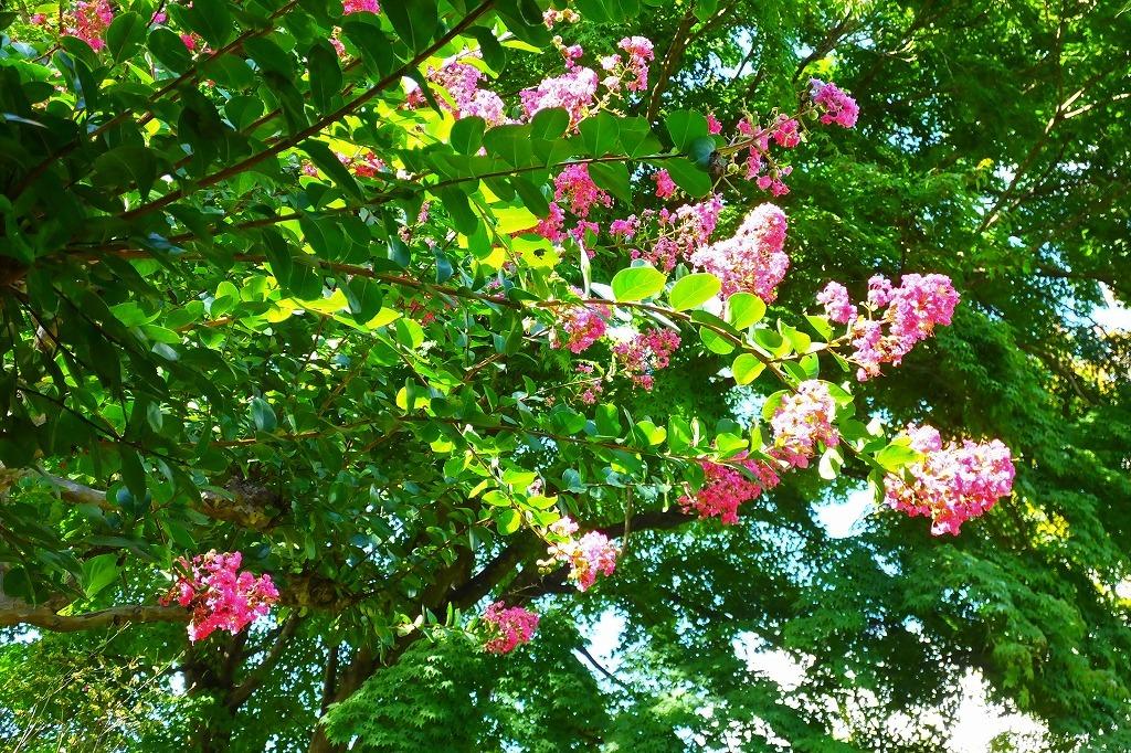霊園で見た花など_b0236251_14020754.jpg