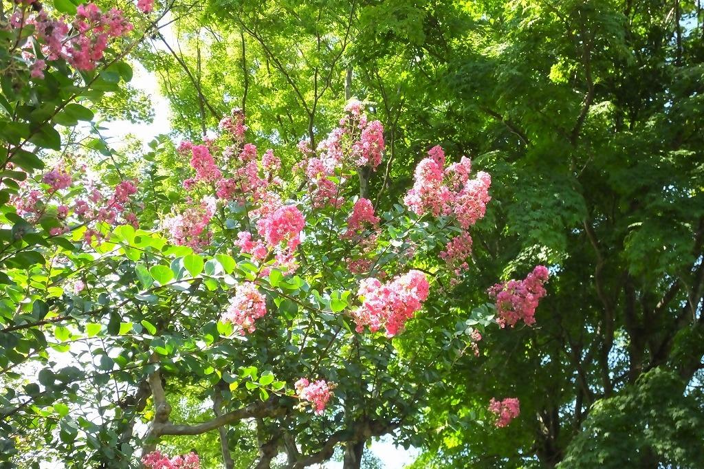 霊園で見た花など_b0236251_14021249.jpg