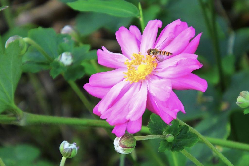 霊園で見た花など_b0236251_14025761.jpg