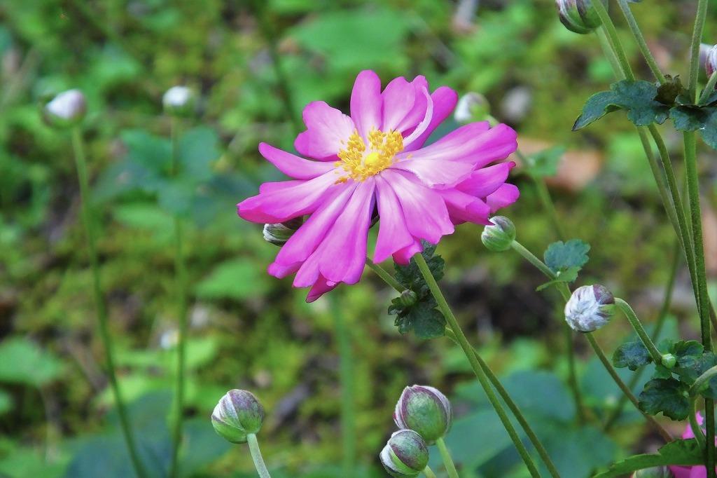 霊園で見た花など_b0236251_14032324.jpg