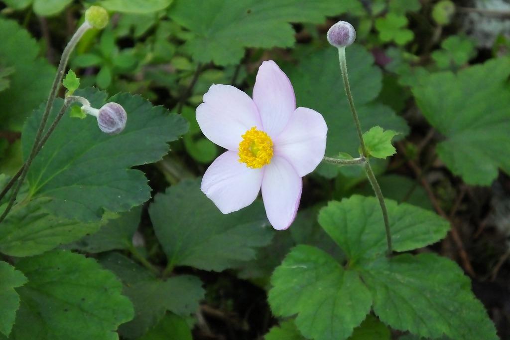 霊園で見た花など_b0236251_14032874.jpg