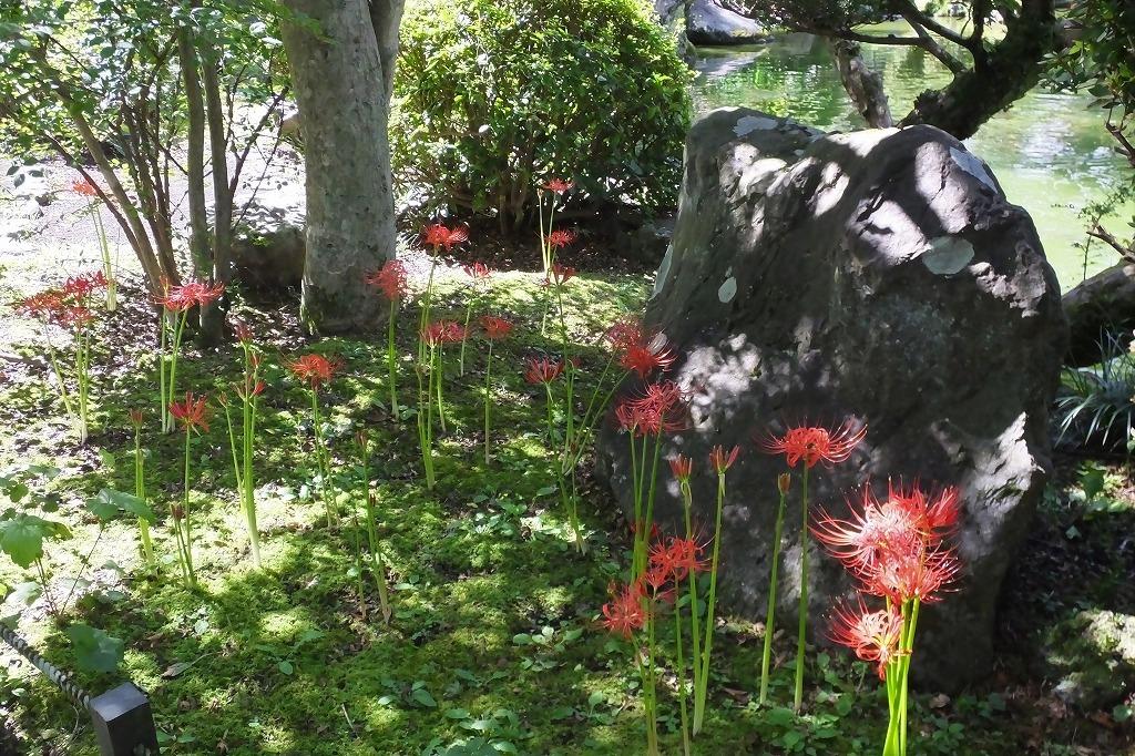 霊園で見た花など_b0236251_14051642.jpg