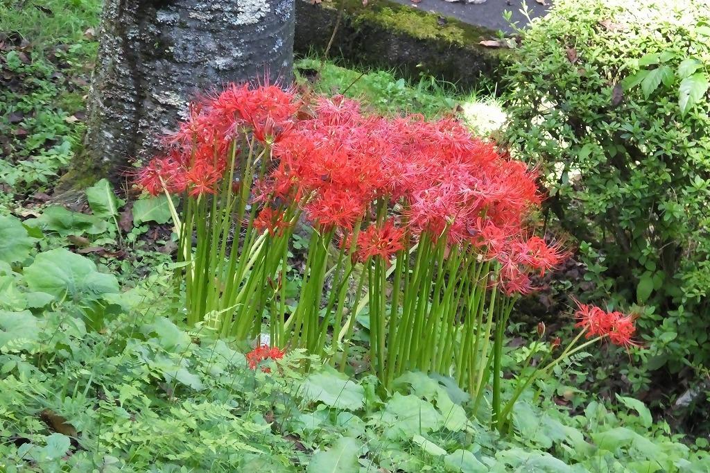 霊園で見た花など_b0236251_14091179.jpg