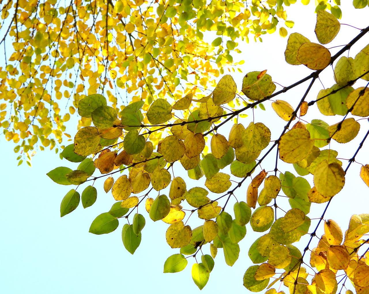 軽井沢の風は秋色_c0305565_17264588.jpg