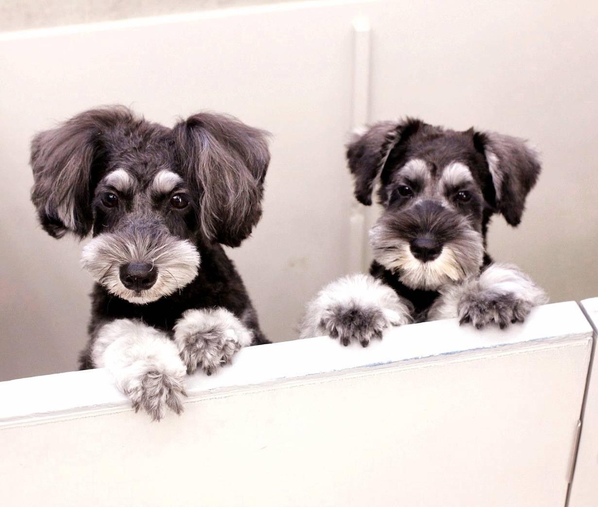癒しの名犬 ボニーとアン最高〜♪_d0339889_20055891.jpg