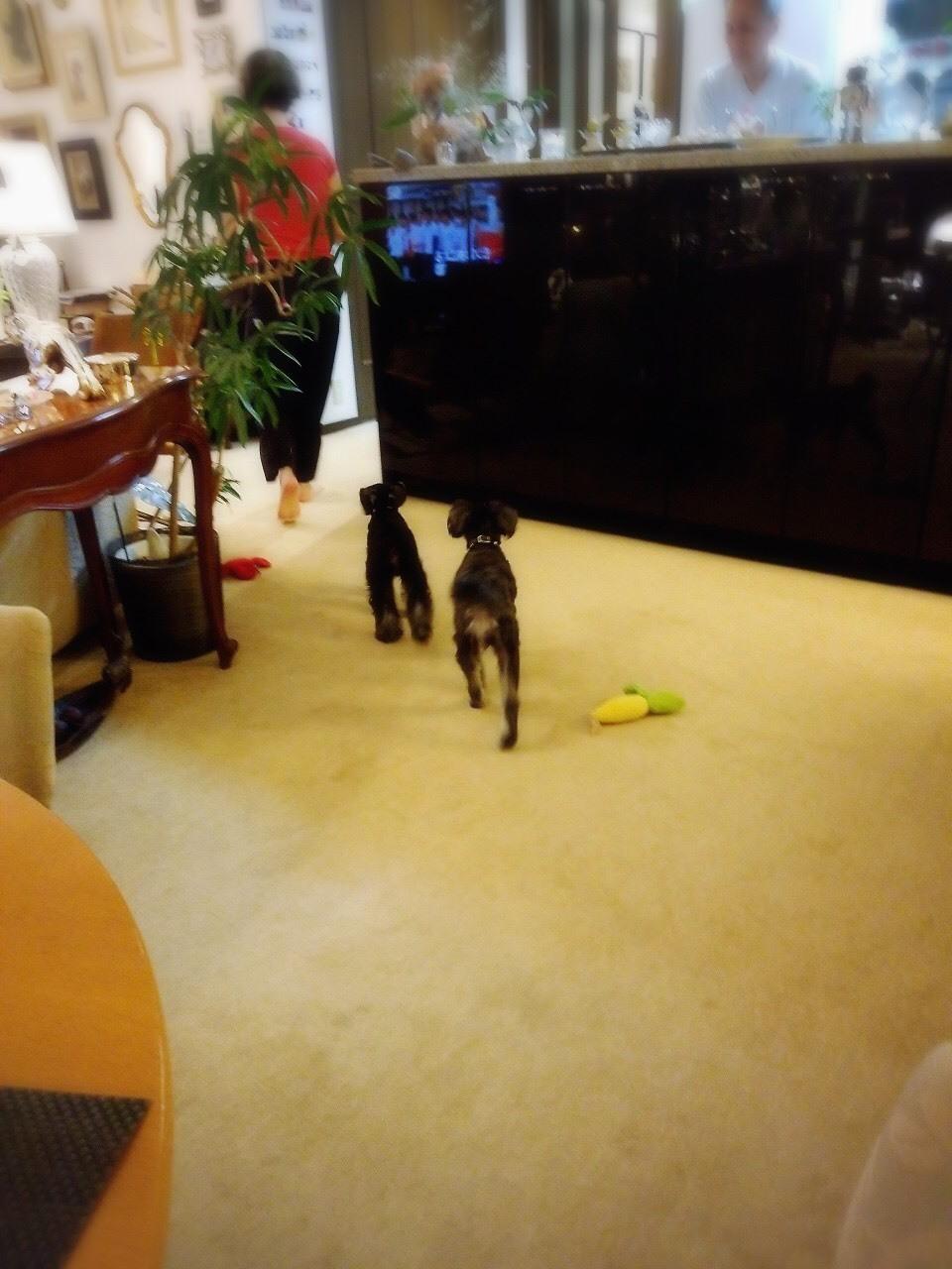 癒しの名犬 ボニーとアン最高〜♪_d0339889_20062577.jpg