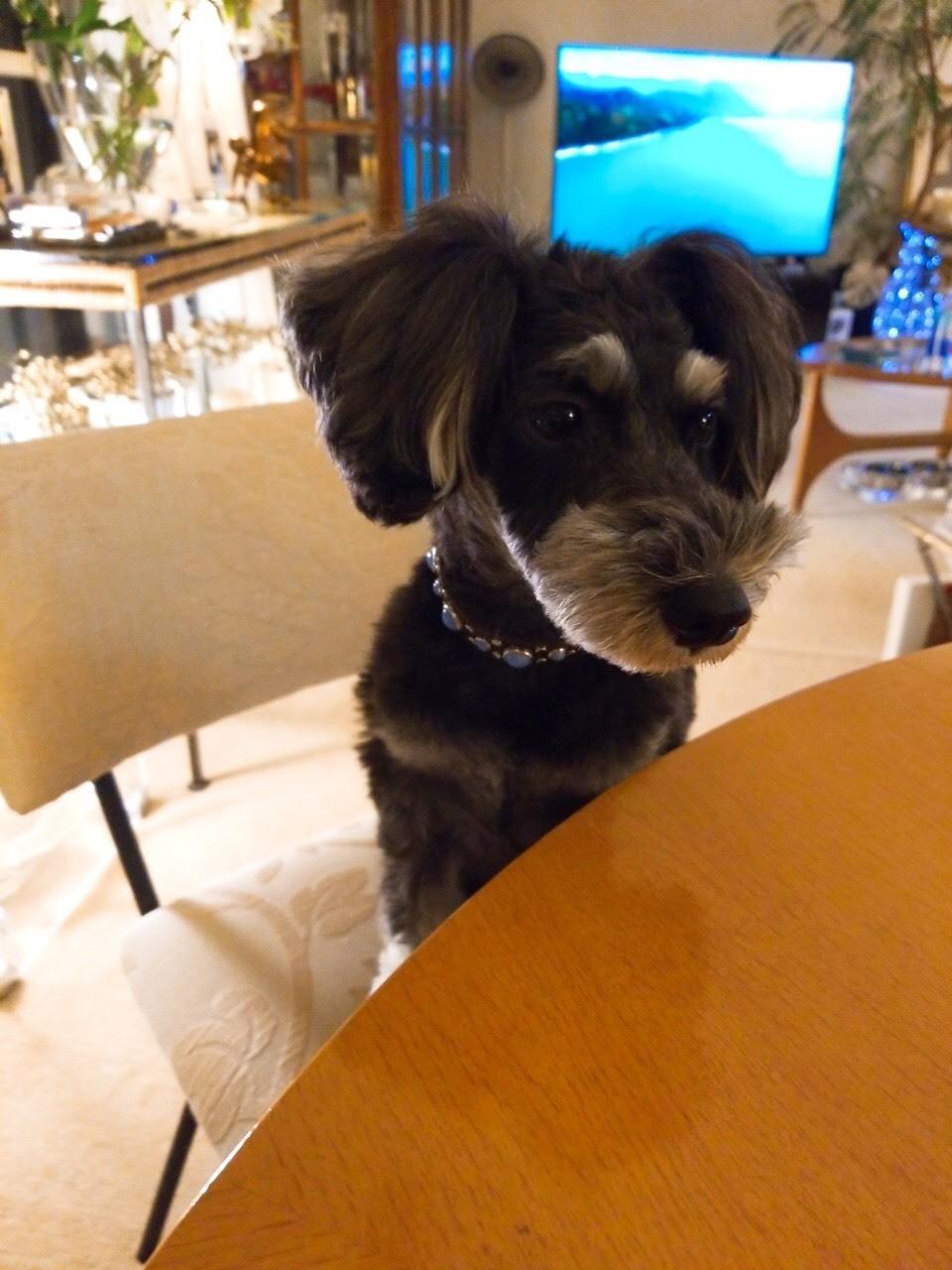 癒しの名犬 ボニーとアン最高〜♪_d0339889_20063729.jpg