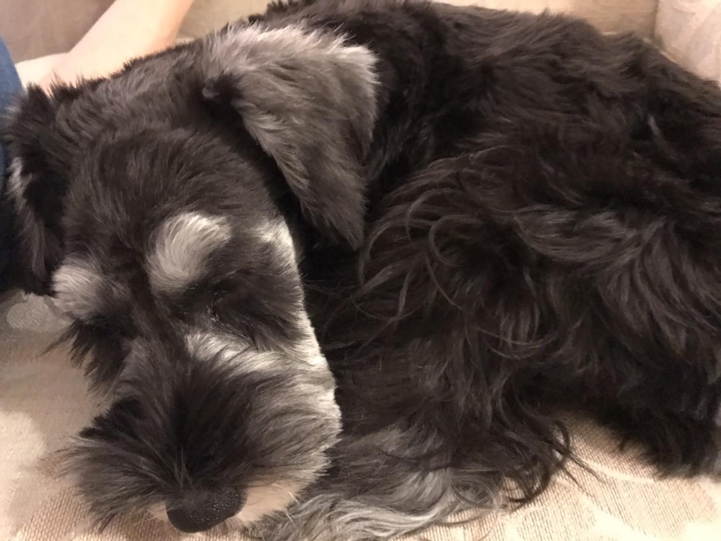 癒しの名犬 ボニーとアン最高〜♪_d0339889_20072381.jpg