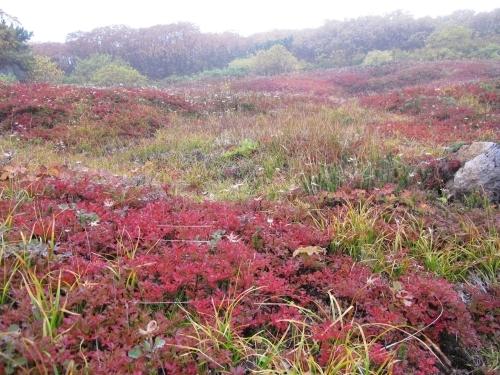 日本一早い紅葉を見に赤岳へ。奇跡のナッキーに会えました♪_d0198793_12504250.jpg