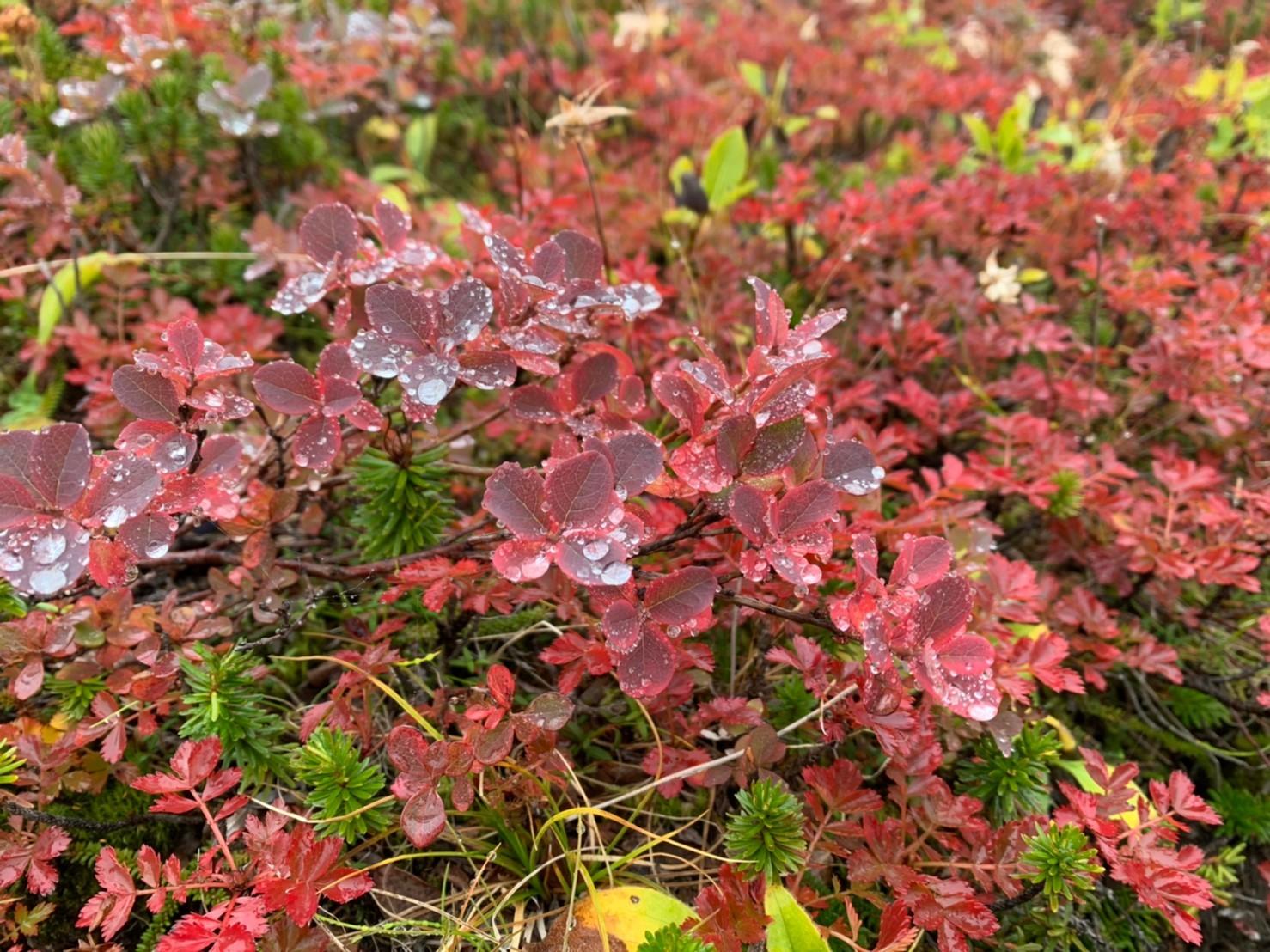 日本一早い紅葉を見に赤岳へ。奇跡のナッキーに会えました♪_d0198793_12504332.jpg