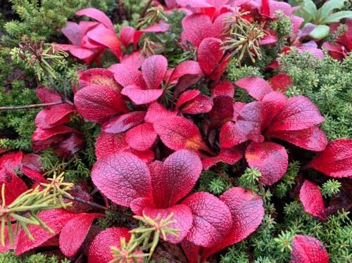 日本一早い紅葉を見に赤岳へ。奇跡のナッキーに会えました♪_d0198793_12504417.jpg
