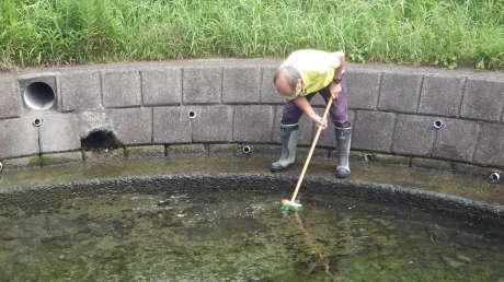 池の清掃で心もきれいに_c0184994_16040575.jpg