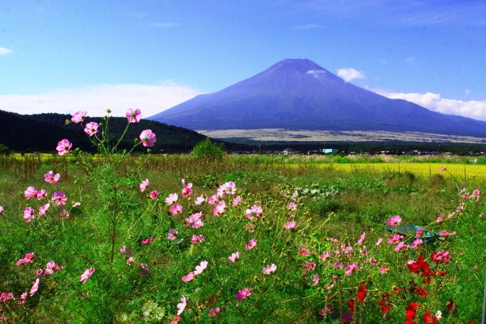 令和2年9月の富士(13) 忍野の田園の富士_e0344396_21032180.jpg