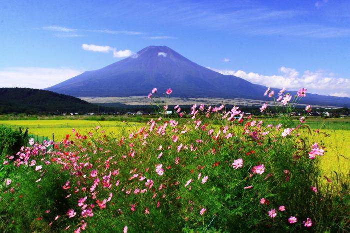 令和2年9月の富士(13) 忍野の田園の富士_e0344396_21032184.jpg