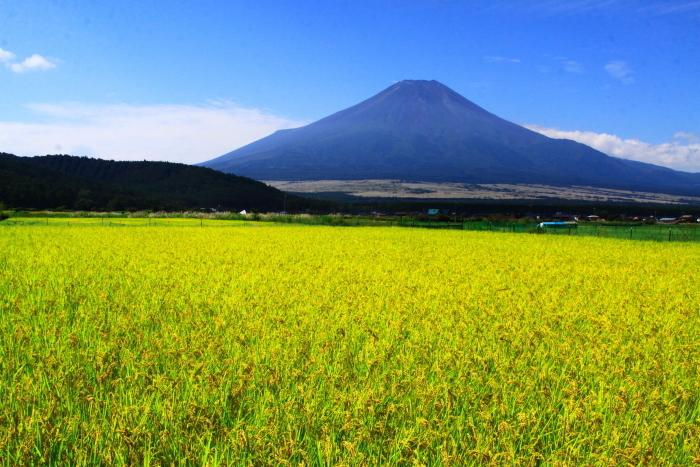 令和2年9月の富士(13) 忍野の田園の富士_e0344396_21032193.jpg