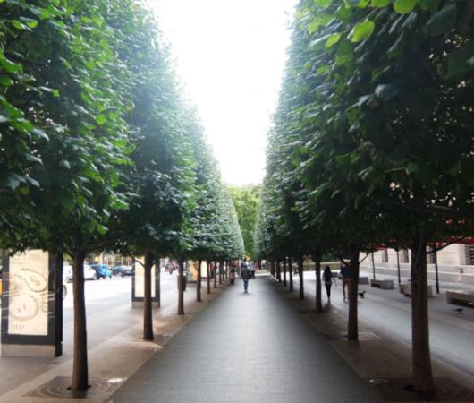 セントラル・パーク横の歩道の並木道_b0007805_04182780.jpg