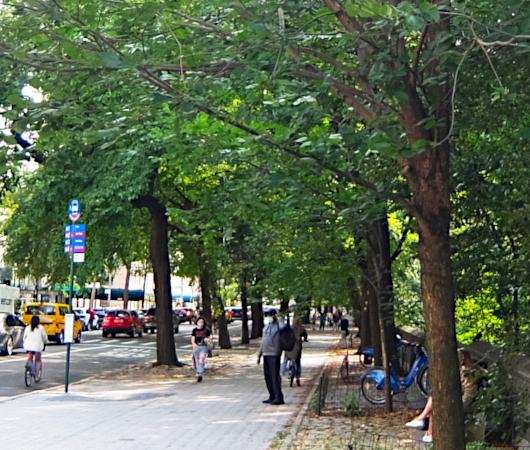 セントラル・パーク横の歩道の並木道_b0007805_04185424.jpg