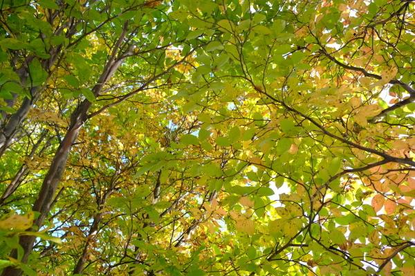 日々のコトの葉だより vol.14 〜いろめがね?季節感たっぷりと。〜_b0174425_16174665.jpg
