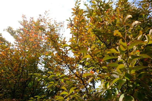 日々のコトの葉だより vol.14 〜いろめがね?季節感たっぷりと。〜_b0174425_16364395.jpg