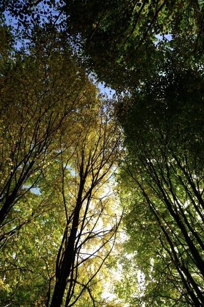 日々のコトの葉だより vol.14 〜いろめがね?季節感たっぷりと。〜_b0174425_16365169.jpg