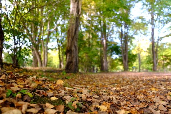 日々のコトの葉だより vol.14 〜いろめがね?季節感たっぷりと。〜_b0174425_16371992.jpg