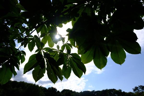 日々のコトの葉だより vol.14 〜いろめがね?季節感たっぷりと。〜_b0174425_16374461.jpg