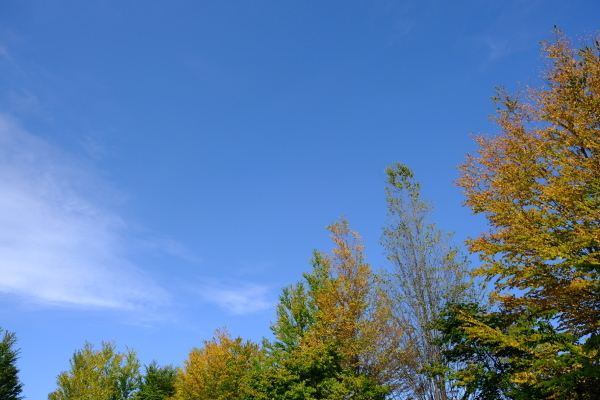 日々のコトの葉だより vol.14 〜いろめがね?季節感たっぷりと。〜_b0174425_17490292.jpg