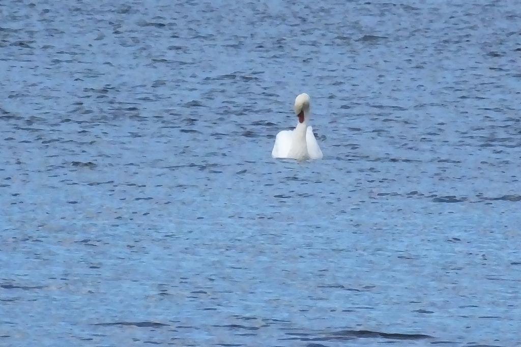 久しぶりに山中湖へ_b0236251_12075558.jpg