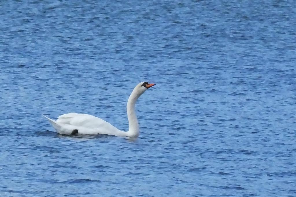 久しぶりに山中湖へ_b0236251_12080088.jpg