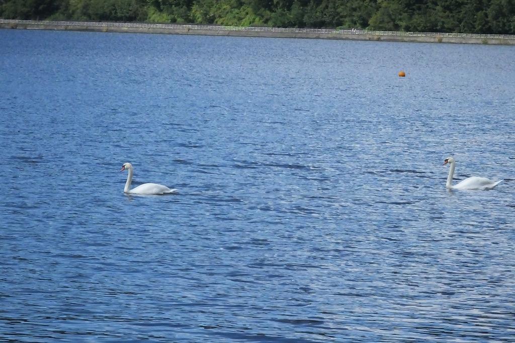 久しぶりに山中湖へ_b0236251_12080550.jpg