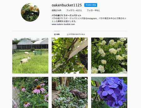 バラや草花のフォトをメインに、、_e0070939_12000992.jpg