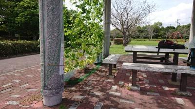 緑のカーテン(ゴーヤ)栽培実験R2.9.30_d0338682_09522471.jpg
