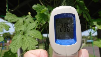 緑のカーテン(ゴーヤ)栽培実験R2.9.30_d0338682_10071674.jpg