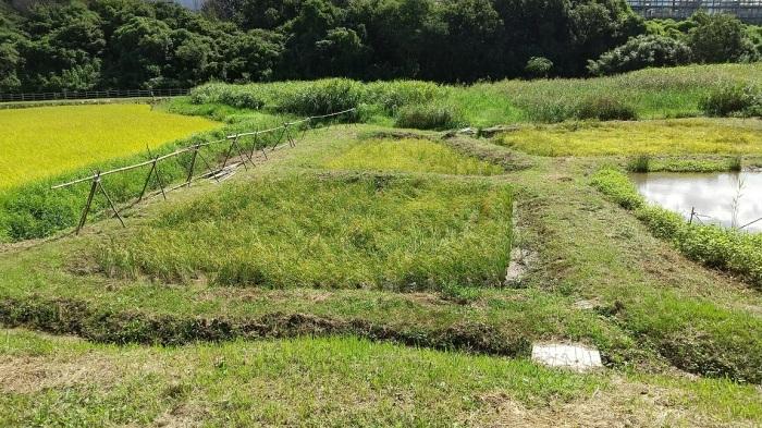 稲刈りは、10月4日に実施します_b0175921_09051735.jpg