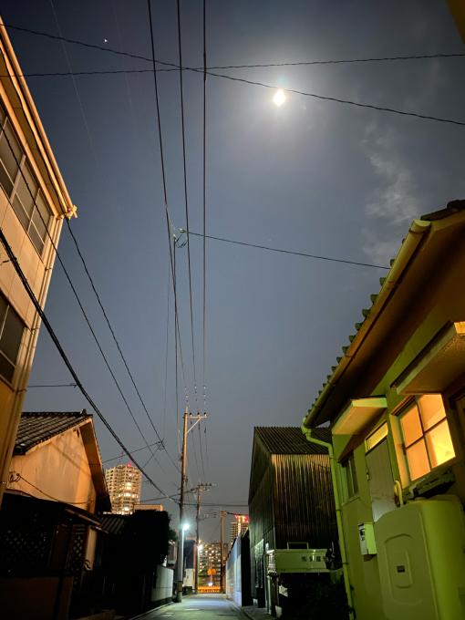 10月2日(金)満月の夜に咲きます★月下美人_d0168331_00261487.jpg