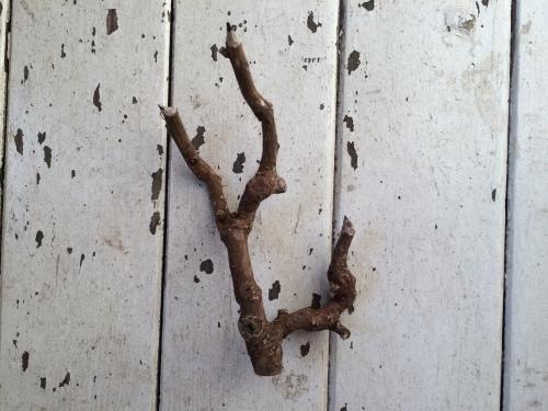 vol.116 「とをが」木の枝えんぴつづくりをします_a0123451_23405618.jpg