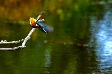 ★先週末の鳥類園(2020.9.26~27)+公園全域調査(10.2)_e0046474_14544978.jpg