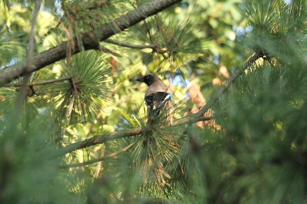 ★先週末の鳥類園(2020.9.26~27)+公園全域調査(10.2)_e0046474_19183106.jpg