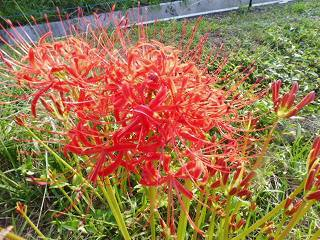 花と中秋の名月_e0046477_18013630.jpg