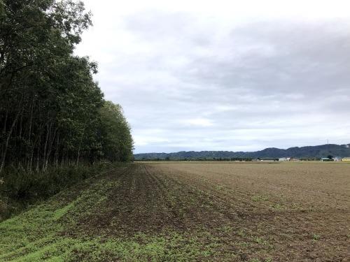 9月27日(日) 新篠津村防風林 列状間伐_c0173813_18420257.jpg