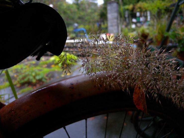 自転車       神無月_f0378554_14114807.jpg