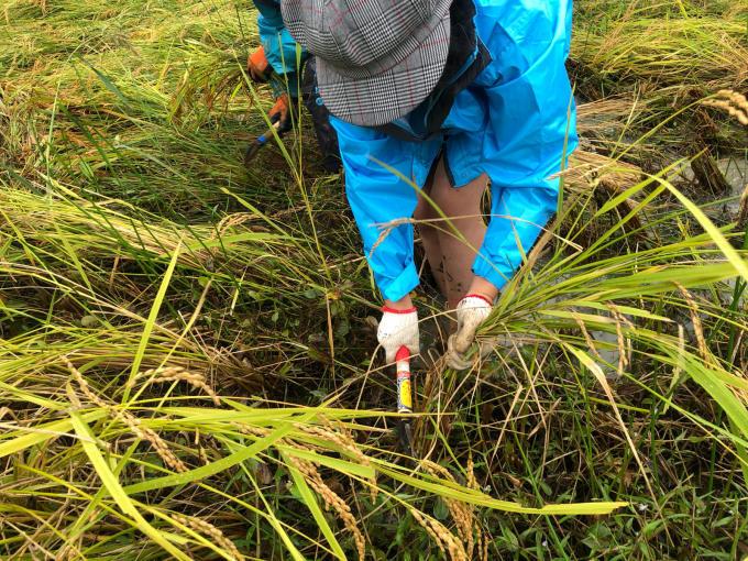 コイの田んぼの稲刈り2020_d0182179_20000134.jpg
