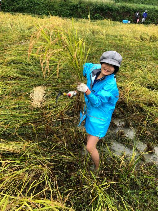 コイの田んぼの稲刈り2020_d0182179_20014908.jpg