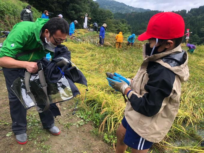 コイの田んぼの稲刈り2020_d0182179_20032239.jpg