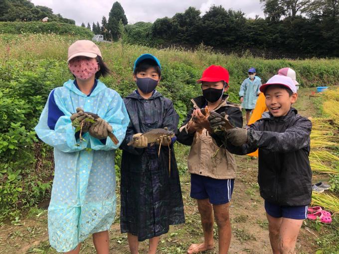 コイの田んぼの稲刈り2020_d0182179_20053388.jpg