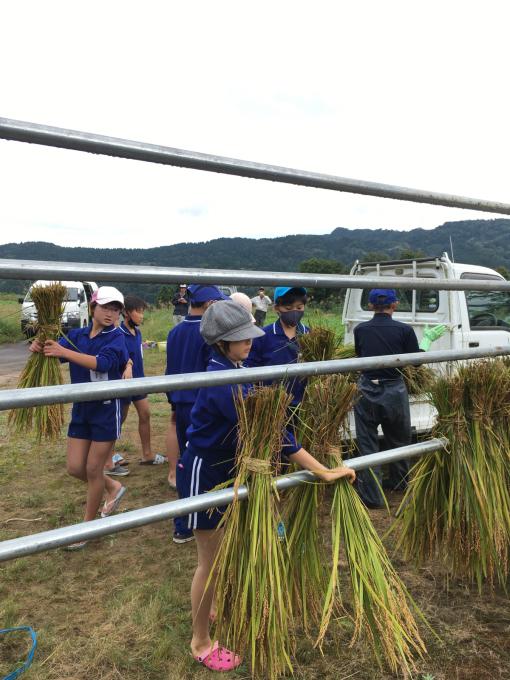 コイの田んぼの稲刈り2020_d0182179_20092938.jpg