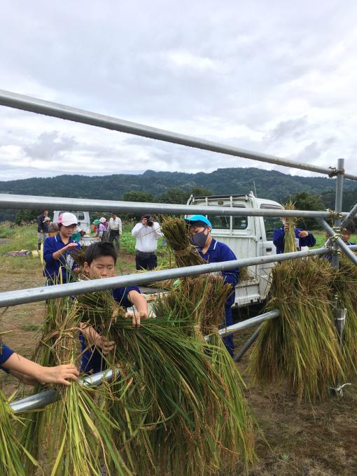 コイの田んぼの稲刈り2020_d0182179_20093687.jpg